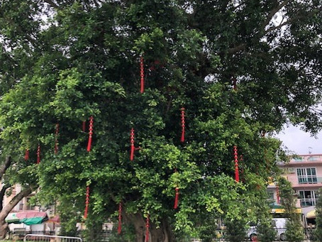 Hong Kong: The Wishing Trees of Tin Hau Temple and 10,000 Buddhas