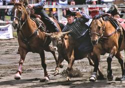 rodeo guy