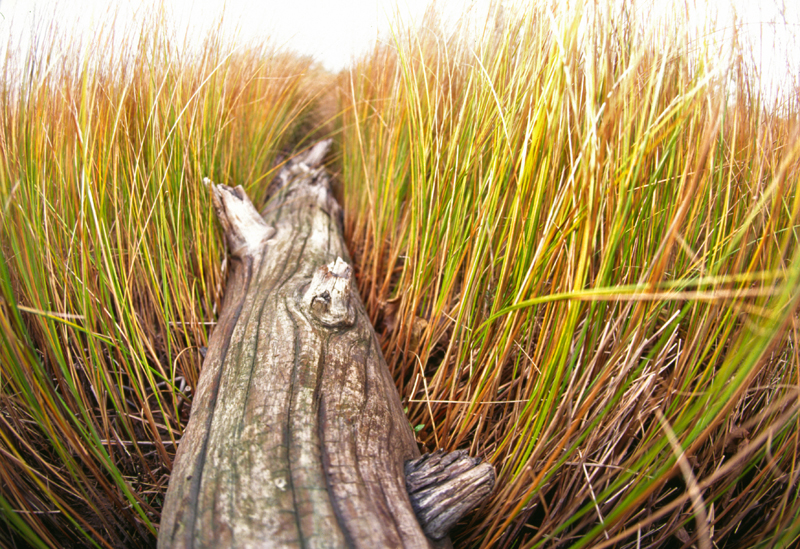 swamp log