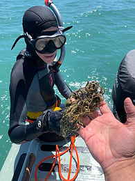 JCU Researcher Katie Chartrand surveying seagrasses in Gladstone. Photo attributed to Dr Michael Rasheed.