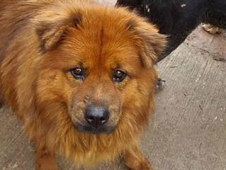 Santuario de Rescate de Perros en Guadalajara