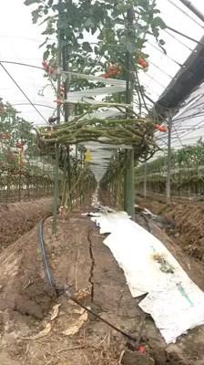 Crop Farm