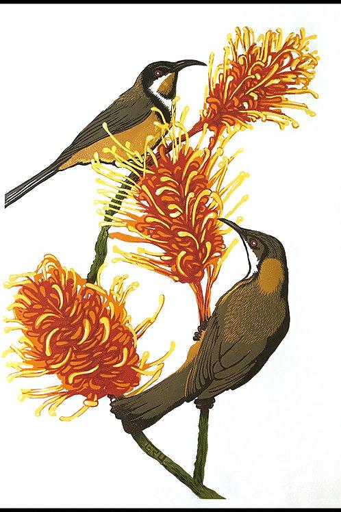 Grevillea andEastern Spinebills