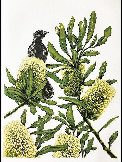 Banksia and Little Wattlebird