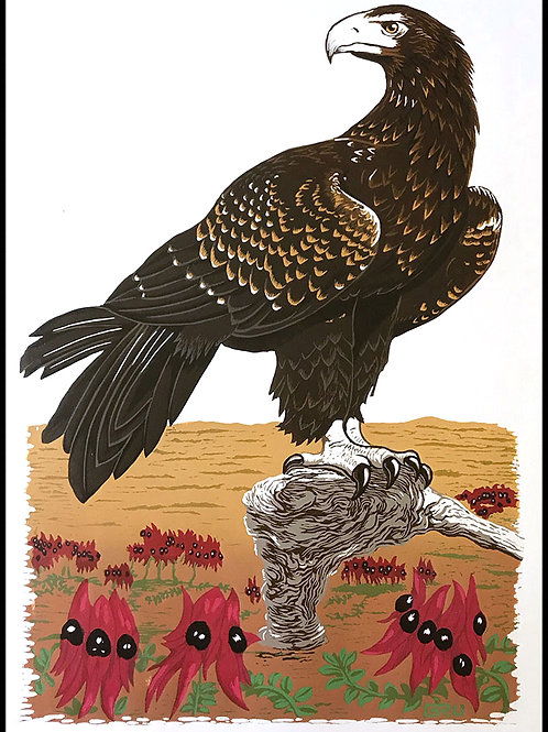 Sturt's Desert Pea and Wedge Tailed Eagle