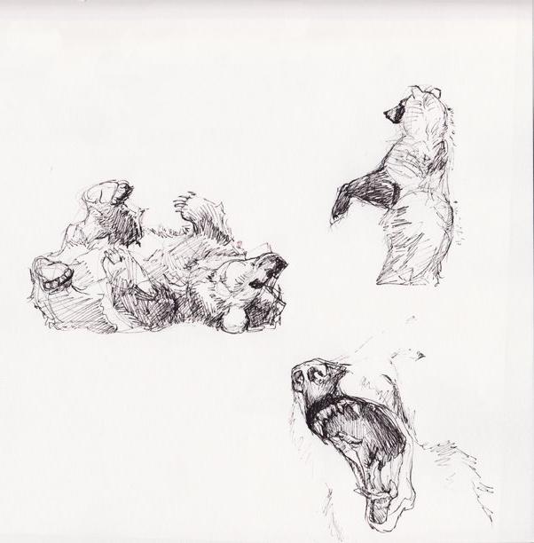 Bear Sketchbook