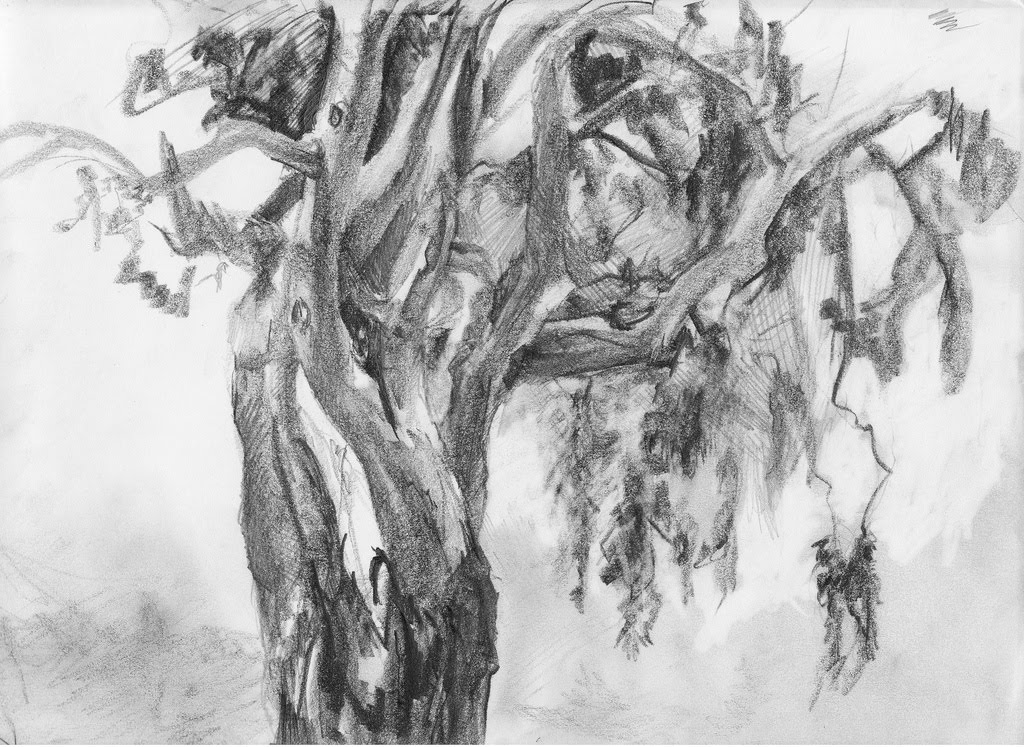 Central Coast Eucalyptus