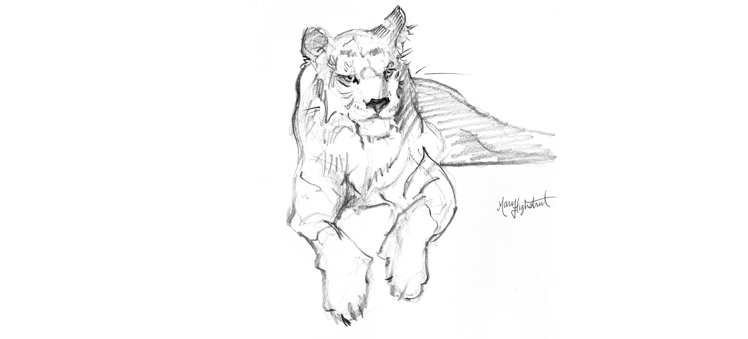 Day 365 Tiger