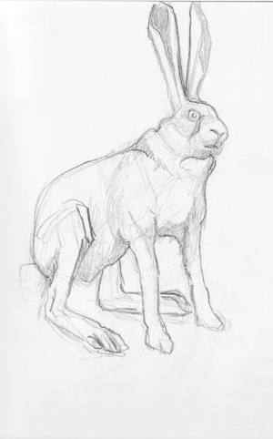 Hare Taxidermy Study
