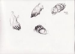 Bear Paws Study