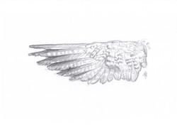 Falcon Wing