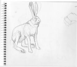 In Sketchbook