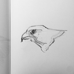 Day 322.  Shape design & more falcons