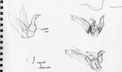 Geese Anatomy