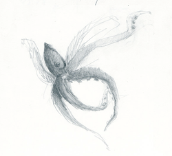 Squid Sketch