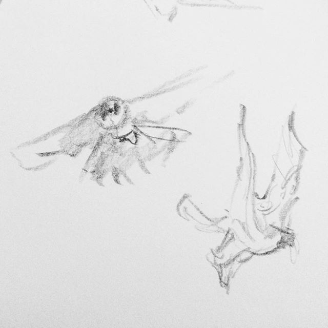 Gesture Drawing Falcons