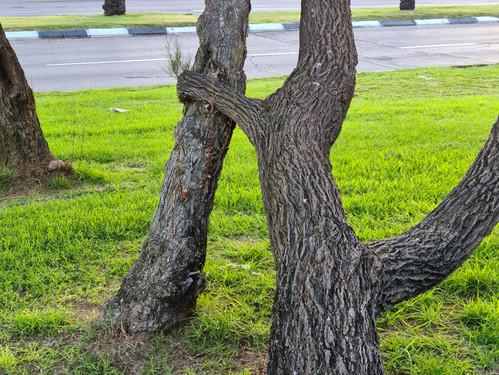 חיבוק עץ
