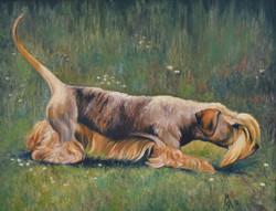 Chesky Terrier.jpg