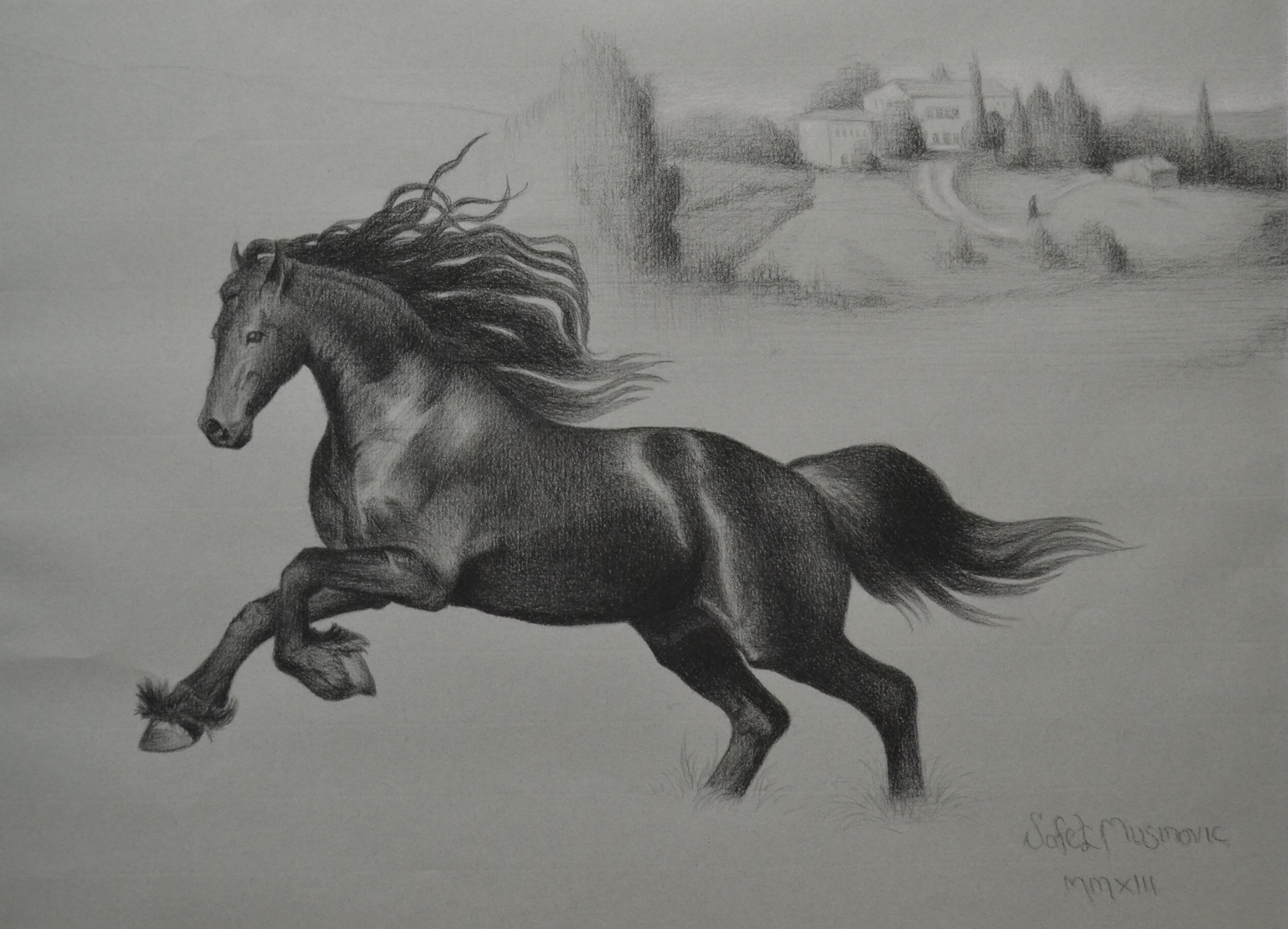 Arabian Horse Opus # 2.jpg