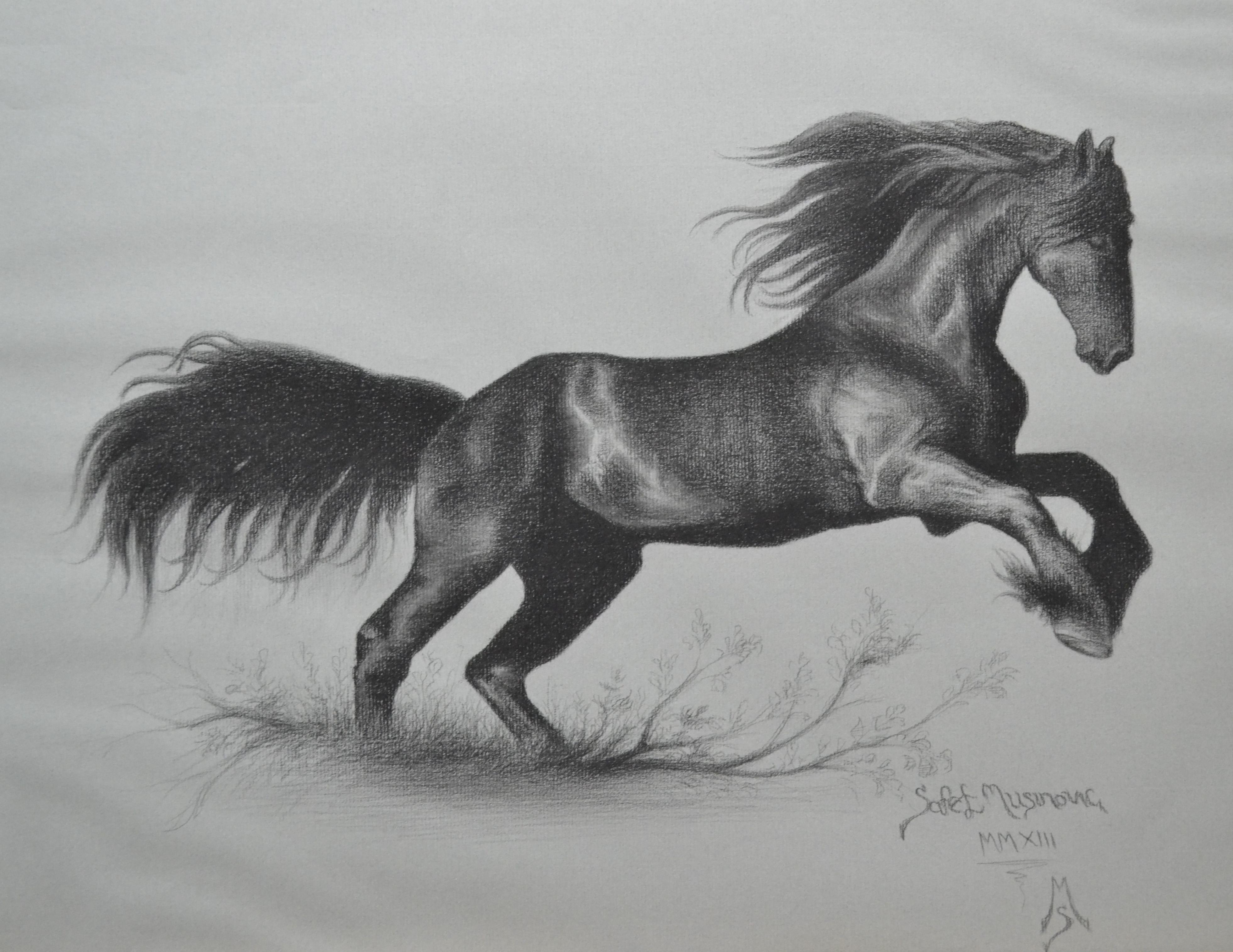 Arabian Horse Opus # 1.jpg