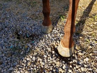 Week 2 of Glue on shoe