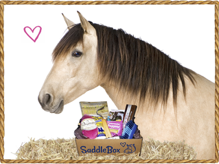 Saddle Box- a new must try!