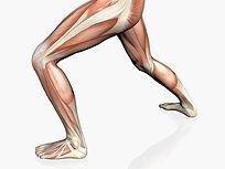 Lesões musculoesqueléticas ligadas ao trabalho