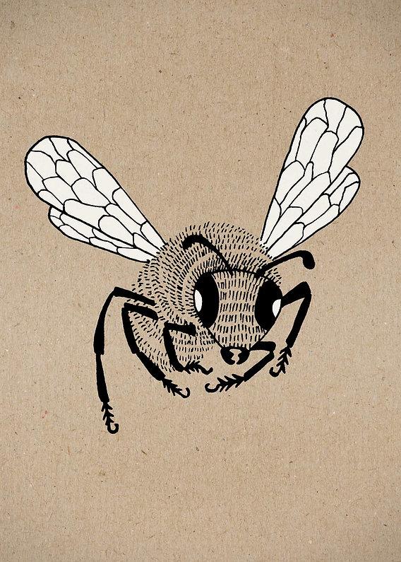 evelyn-trutmann-illustration_fauna_biene