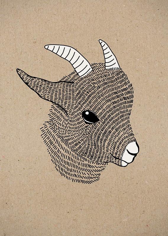 evelyn-trutmann-illustration_fauna_gizi.