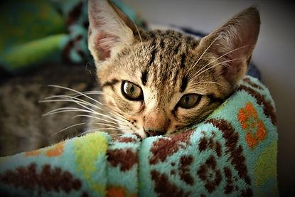 Котёнок חתלתול