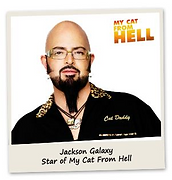 My Cat is from hell