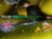 Ryba cebulowa popisuje się.jpg