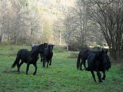 2011.11.20_de_Biac_à_Idrein_chevaux_Françoise_(33)