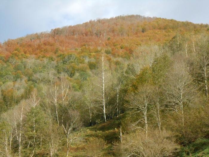 L'automne avec ses hêtres colorés