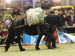 Cheval castillonnais baté