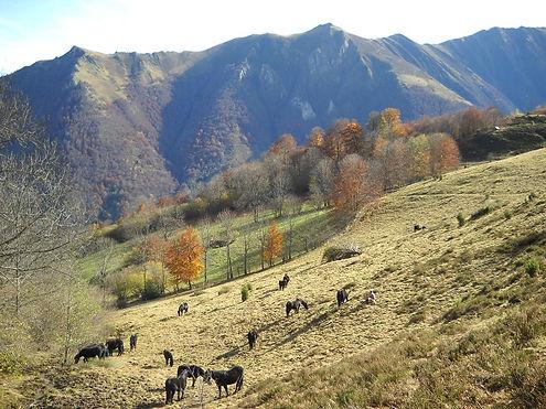 2011.11.11_troupeau_à_Biechet,_Biac_mais