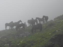 Nos chevaux dans le brouillard