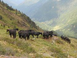 Estive Vallée d'Orle Ariège Pyrénées