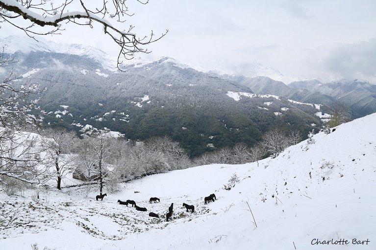 NLe troupeau sous la neige en avril