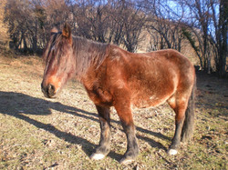 2010.02.21_chevaux_à_Villargein_044