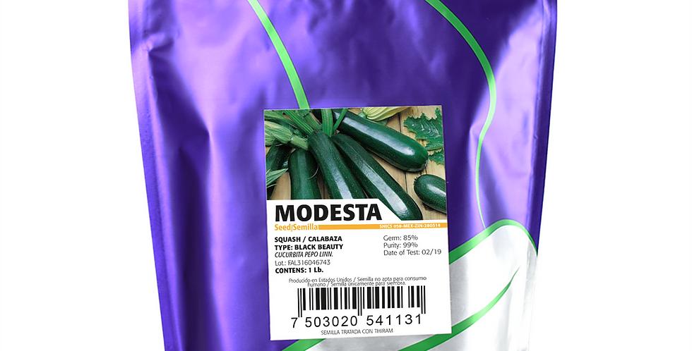 Calabaza Modesta