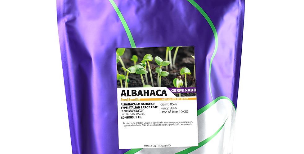 Germinado de Albahaca