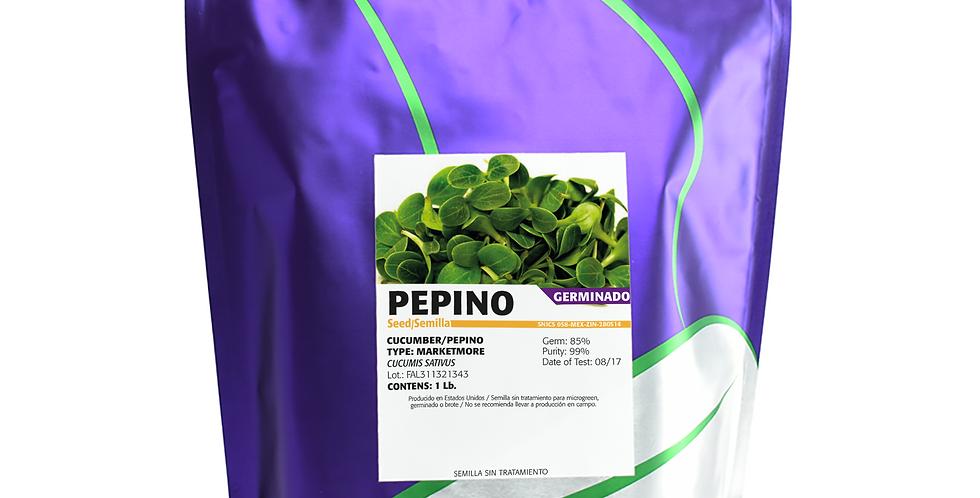 Germinado de Pepino