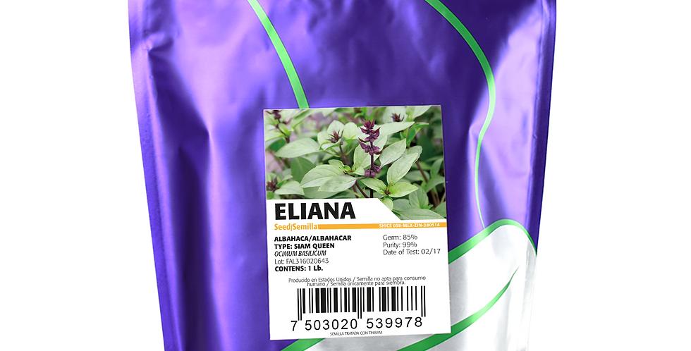 Albahaca Eliana