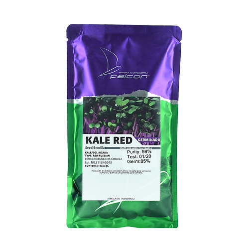 Germinado de Kale Red