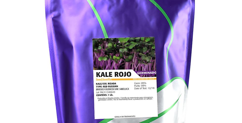 Germinado de Kale Rojo