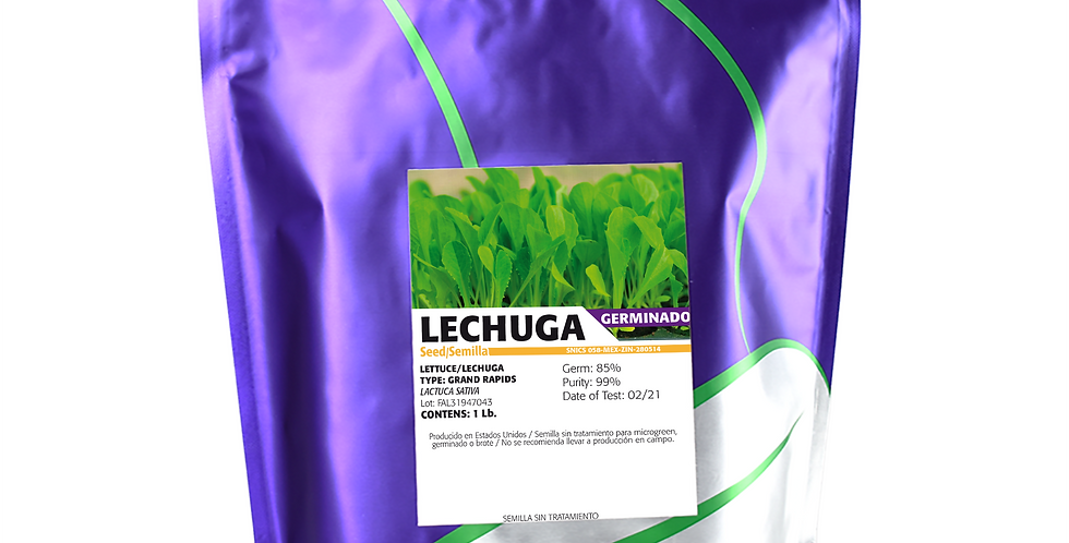 Germinado de Lechuga