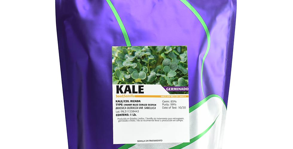Germinado de Kale