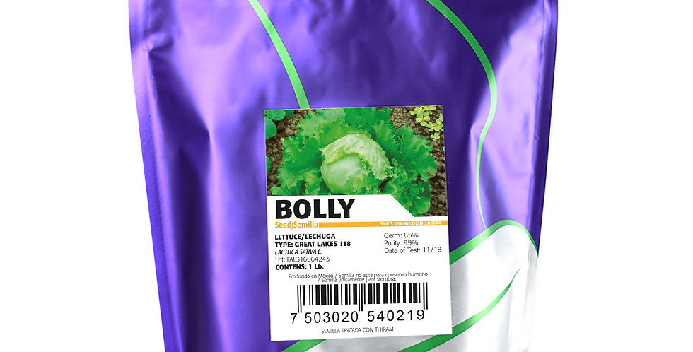 Lechuga Bolly