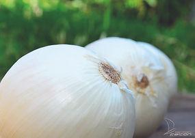 ventranna f1, cebolla hibrida